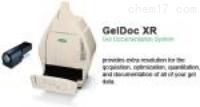 进口伯乐GelDocXR凝胶成像系统多少钱